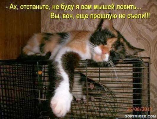 1119980fcd107a19807def7e6e5_prev