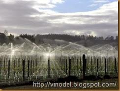 влажность и рост винограда
