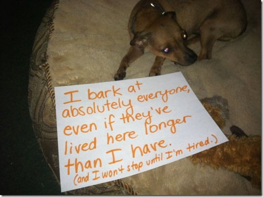 dog-shaming-bad-20