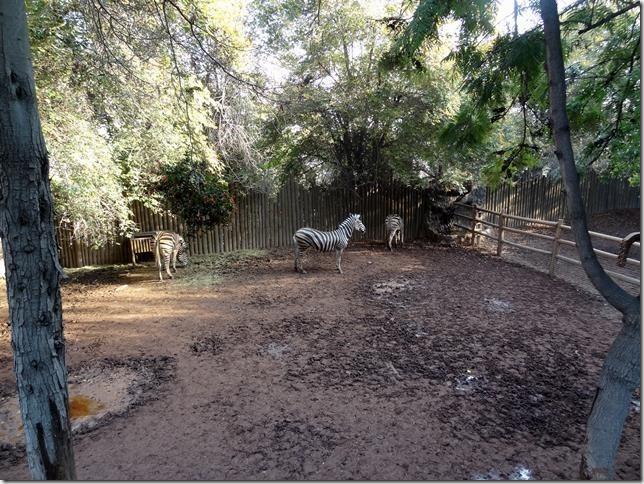 Santiago_Zoo_DSC03636