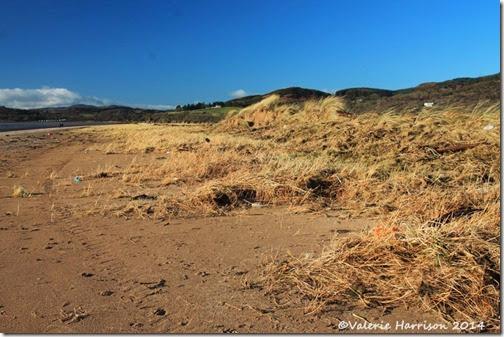 19-damaged-dunes