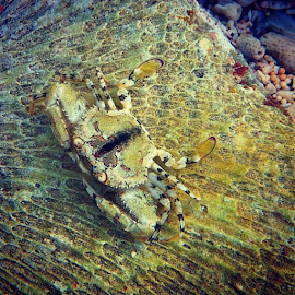 Small crab... by Christian Sutheja - Instagram & Mobile iPhone
