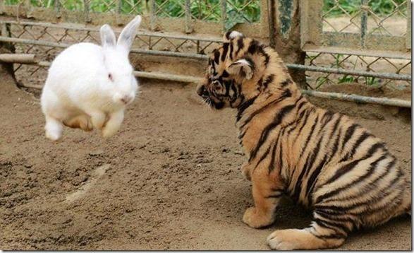 funny-animals-cute-10