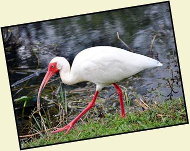 10b - White breeding colors