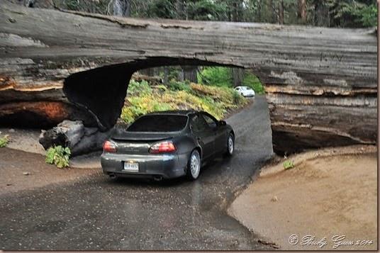 09-20-14 Sequoias 06