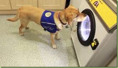 dog washer