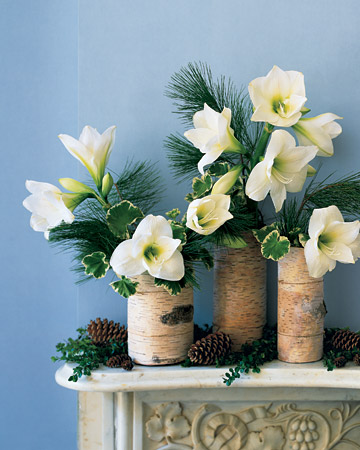 Create a serene winter tableau with this simple arrangement: birch bark wrapped around glass cylinders filled with plants found easily at this time of year.