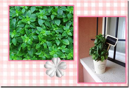 plantas aromaticas (page 1)