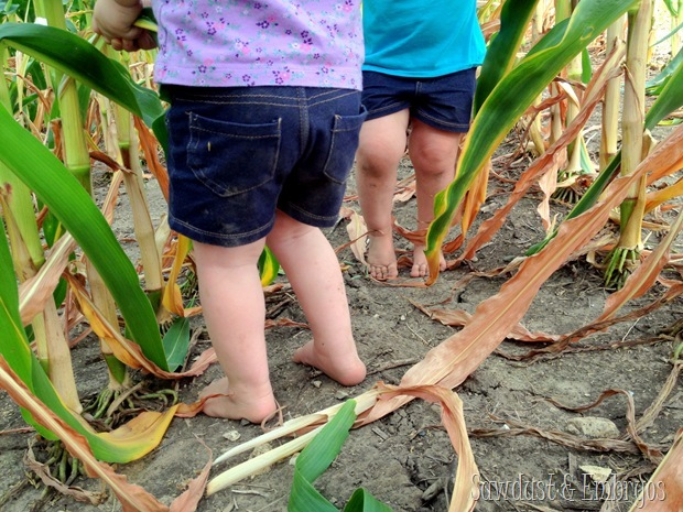 Playing in the cornfield {Sawdust and Embryos}