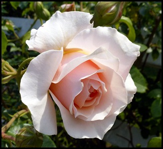 08c1 - Marginal Way - Roses