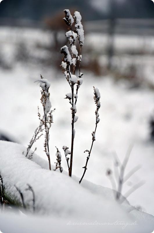 Schneesonntag 20zwölf (11)