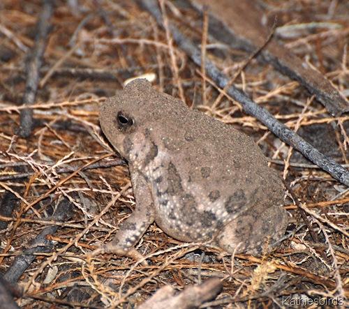 3. toad-kab