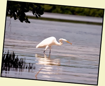 17j - egret caught a shrimp