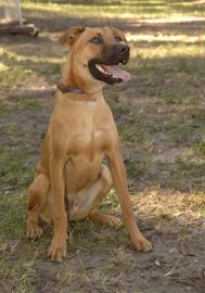 Boomer is from the Jacksonville Humane Society in Jacksonville, Florida. To learn more about Boomer, click on the link to the shelter below.