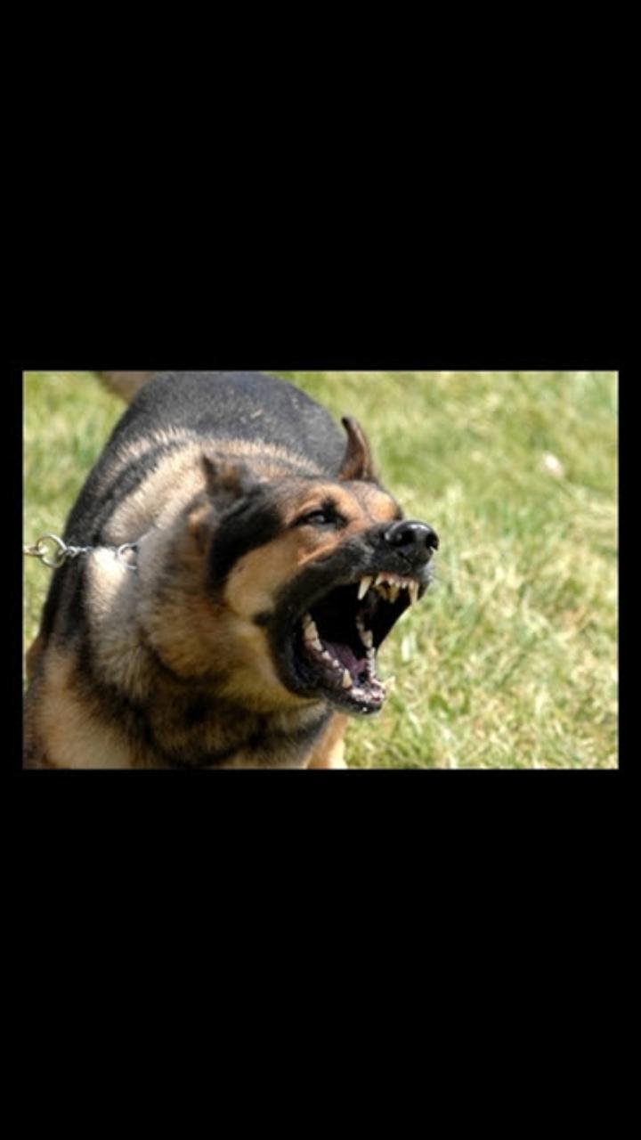 Peribahasa Hari Ini Bagai Melepas Anjing Yg Tersepit
