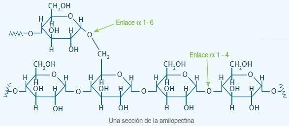 almidon 2