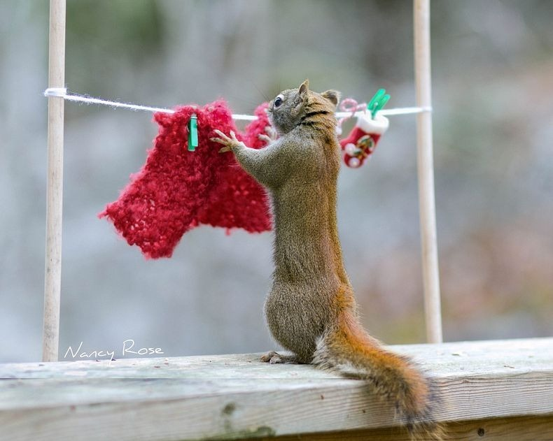 nancy-rose-squirrels-7