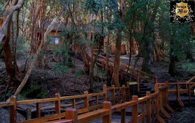 Argentina-Bariloche,R.Negro,bosques-debrujaMar-0707