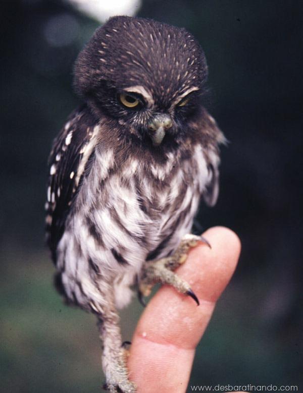 filhotes-de-animais-fotos-cute-cuti-desbaratinando (30)