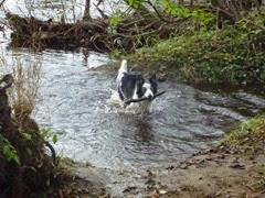the wet dog