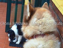 Glória Ishizaka - Meu filhote Pluto - 28