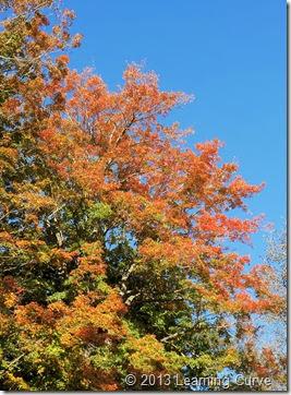Fall 2013 046