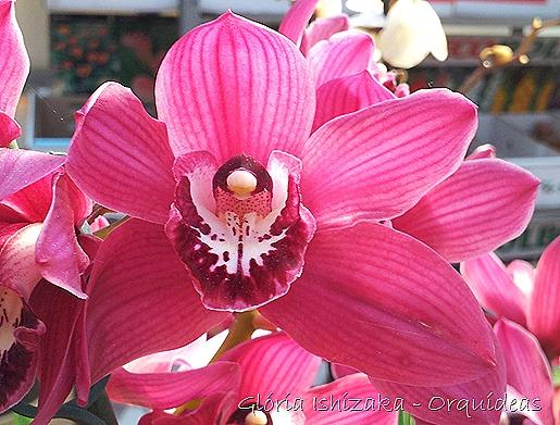 Glória Ishizaka - orquideas 39