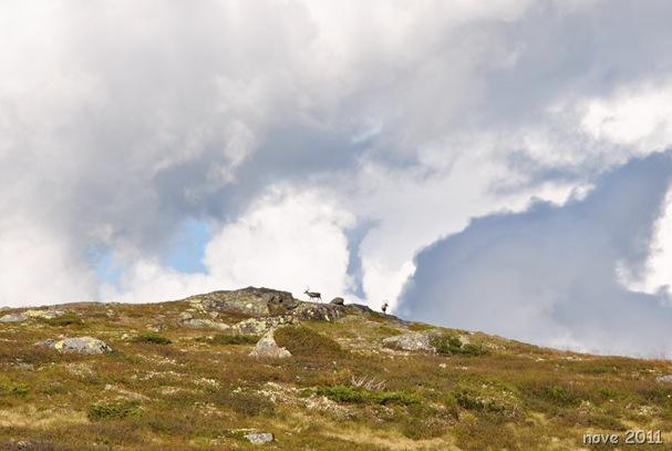 Flatvollen-Reinsjøen 015