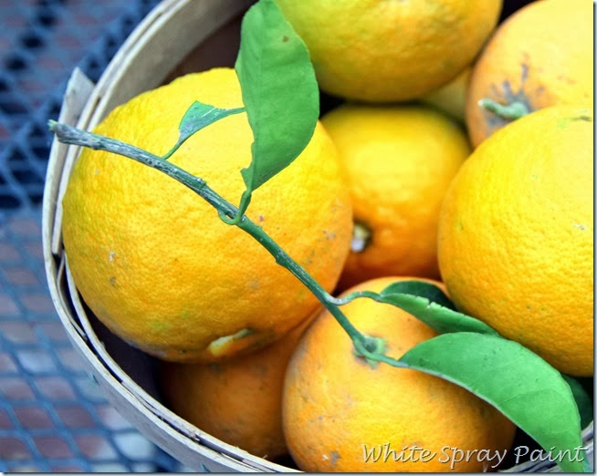 Navel Oranges 2014