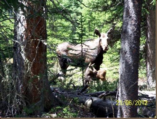 Chucks Moose and Baby