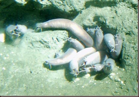 Amazing Animal Pictures Hagfish (8)