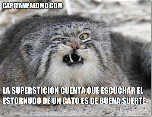 La superstición cuenta que escuchar el estornudo de un gato es de buena suerte