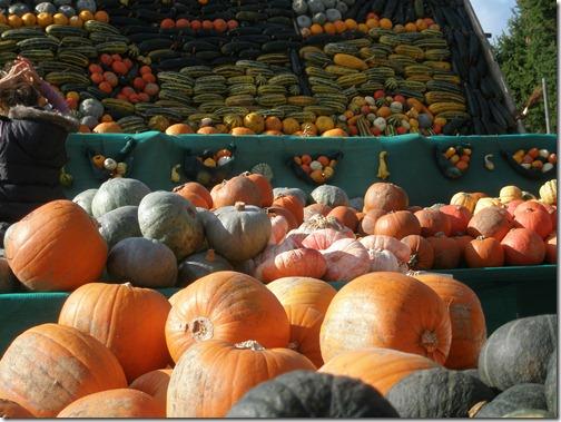 pumpkins 002