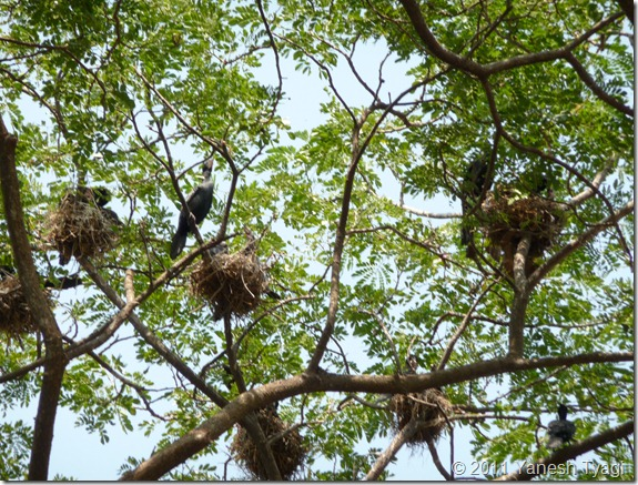 Birds nest @Kumarakom (Yanesh tyagi)