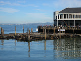 Pier 39, the home of sea lions