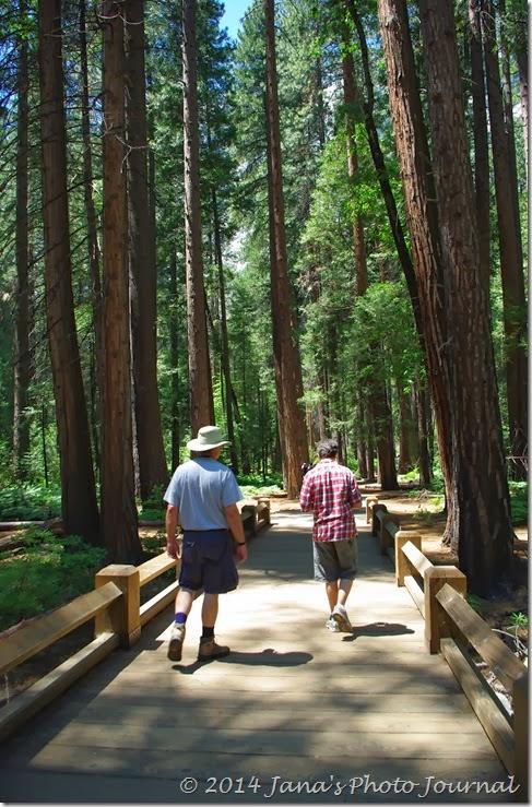 Bridge On The Trail to Yosemite Falls