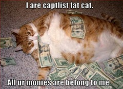 Cat lying in a pile of money