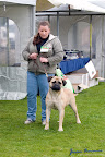 20100513-Bullmastiff-Clubmatch_31092.jpg