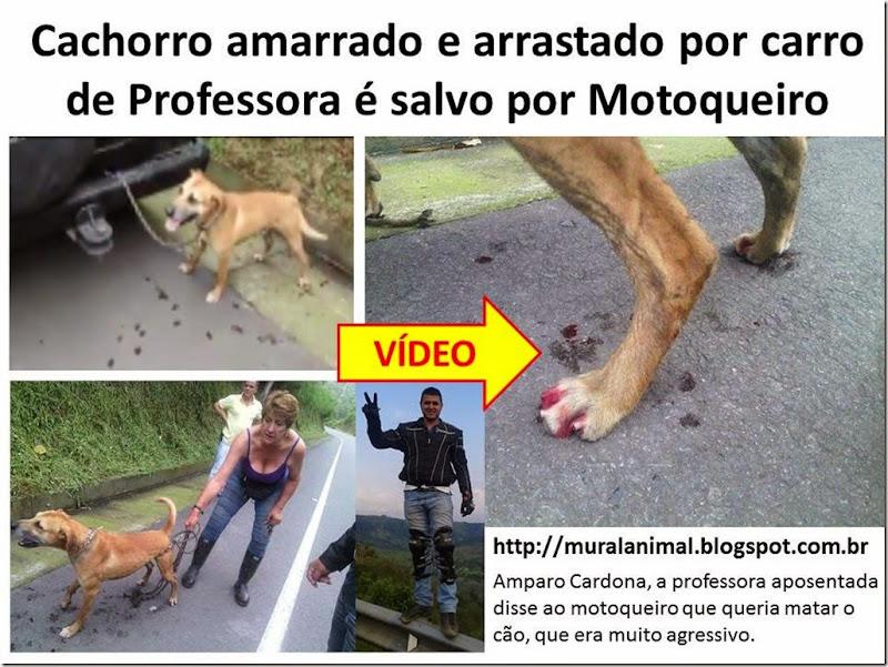 Cachorro amarrado e arrastado por carro de Professora