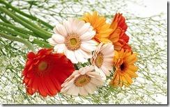 flowers wallpaper pic 1024X768