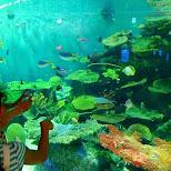 the giant fish tank at the Shinagawa Aquarium in Shinagawa, Tokyo, Japan