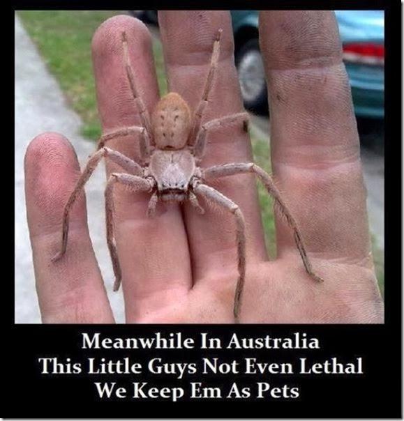 australia-scary-spiders-015