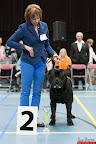 20130511-BMCN-Bullmastiff-Championship-Clubmatch-2186.jpg
