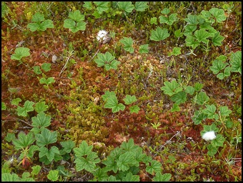 04w10b - Hike - Red and Green Sphagnum Moss