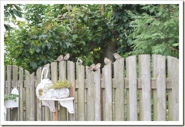vogels in de tuin 001