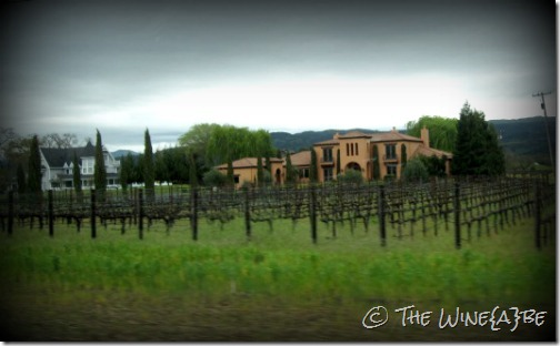 napa_vineyard