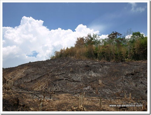 slash_burn_farming_03