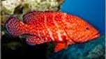Réunion-Mayotte vieille de corail