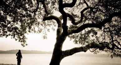 tree new