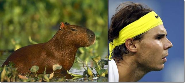 rafa nadal capibara (10)